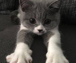 animal, cutie, and kitty image