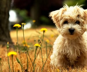 flowers, little dog, and nature image