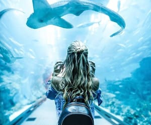 aquarium, photography, and shark image