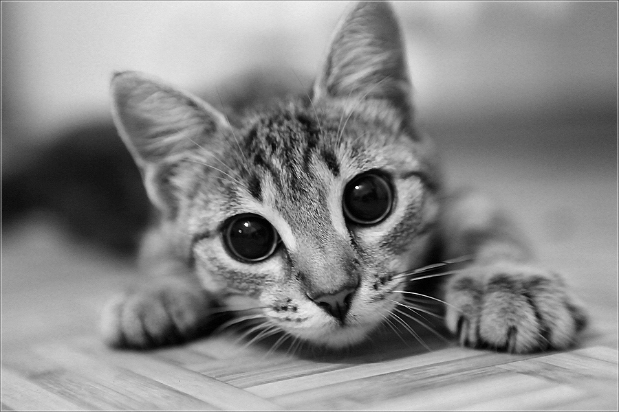 109 images about cats on We Heart It | See more about cat