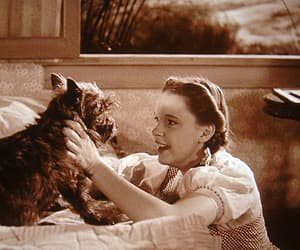 The wizard of OZ and toto image