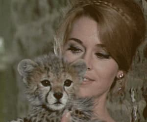 gif and leopard cub image