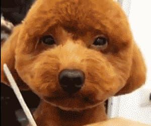 canine, fun, and gif image