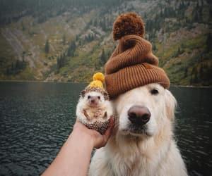 autumn, dog, and hedgehog image