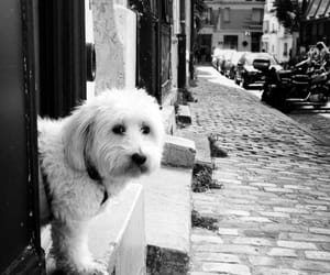black&white, dogs, and europe image