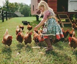 Chicken, cuteness, and fun image