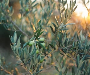 nature and olive image