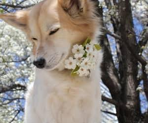 dog, doggy, and flowers image