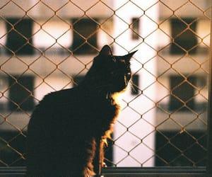 animal, vintage, and window image