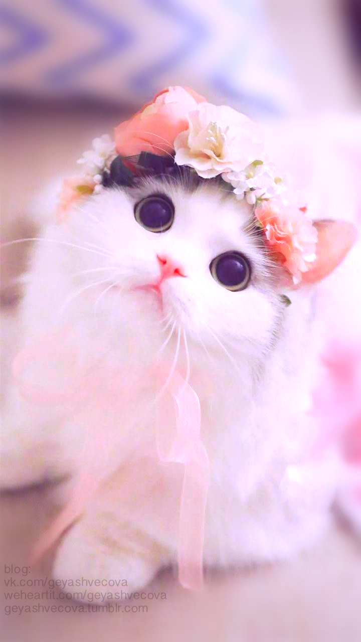 440 Images About Cats On We Heart It See More About Cat Animal And Cute