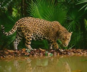amazing, brazil, and green image