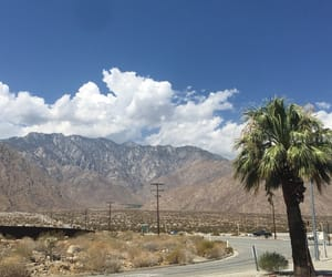 desert, palm, and vacation image