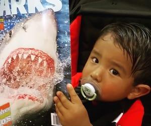 shark, florida, and revista image