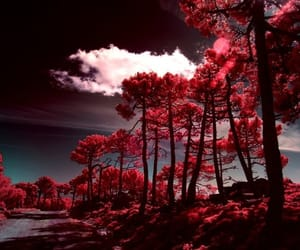 forest, pink, and red image