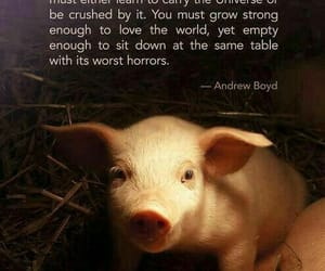 compassion, animalrights, and love image