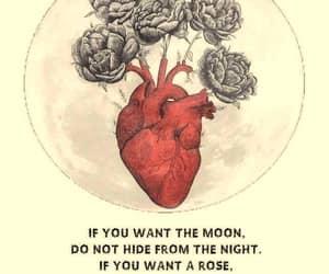 moon, night, and Rumi image