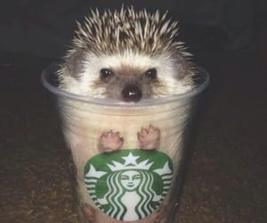 cute, starbucks, and animal image