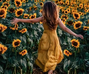 flowers, sunflower, and photography image