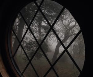 window, fall, and forest image