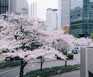 japan, photography, and sakura image