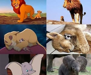 animals, lion, and disney image