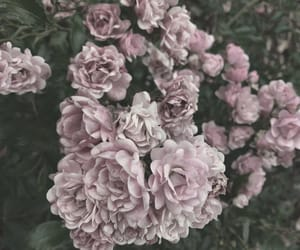 blumen, flowers, and fotografie image