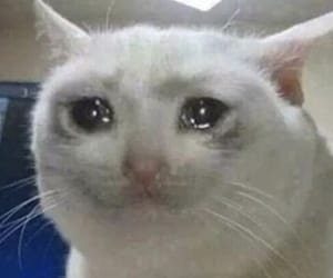 cat, funny, and cry image