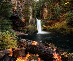 nature, nature photography, and oregon image