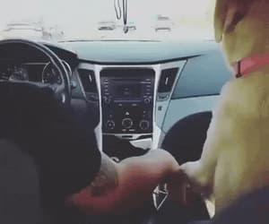 canine, dog, and doggie image