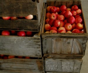 apples, october, and autumn image