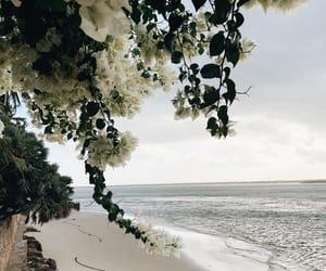 beach, ocean, and flowers image