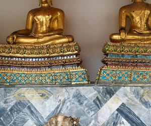cat, Temple, and thailand image