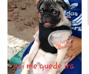 funny, perrito, and memes image