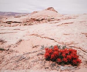 desert, flower, and world image