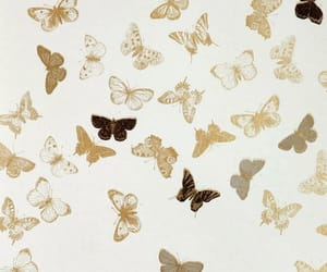 brown, butterfly, and gold image