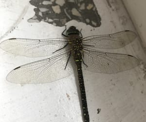 beautiful, dragonfly, and green image