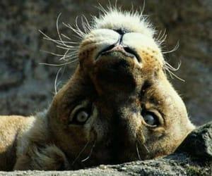 animal, beautiful animal, and Animales image