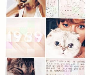 cat, duvar kağıdı, and love image