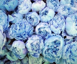 flowers, blue, and rose image