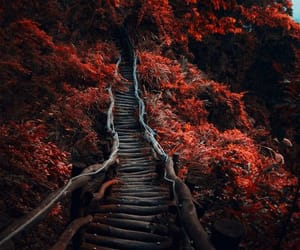 red, nature, and autumn image