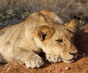 cansada, felino, and descansando image