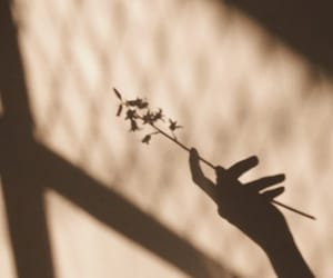 flowers, shadow, and aesthetic image
