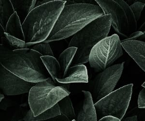 theme, green, and leaves image