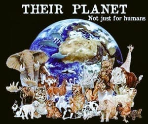 animal rights, planet, and animals image