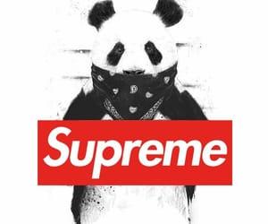 panda, supreme, and wallpaper image