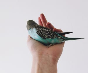 bird, blue, and hand image