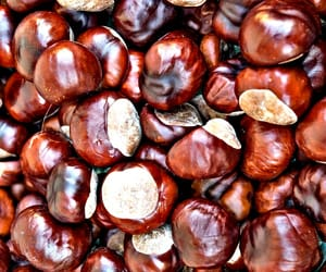 autumn, fall, and chestnuts image