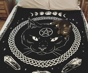 black, cat, and coven image