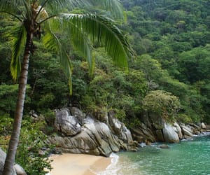 background, paradise, and tropical image
