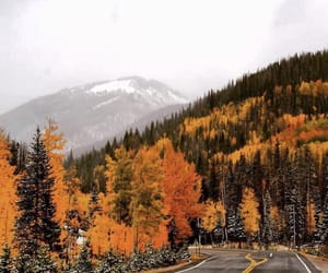 beautiful, orange, and trees image